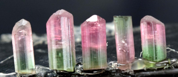 MP01-323 , 19.0 cts Terminated & Undamaged Bi-Color Tourmalines Crystals Lot from Paprok Afghanistan